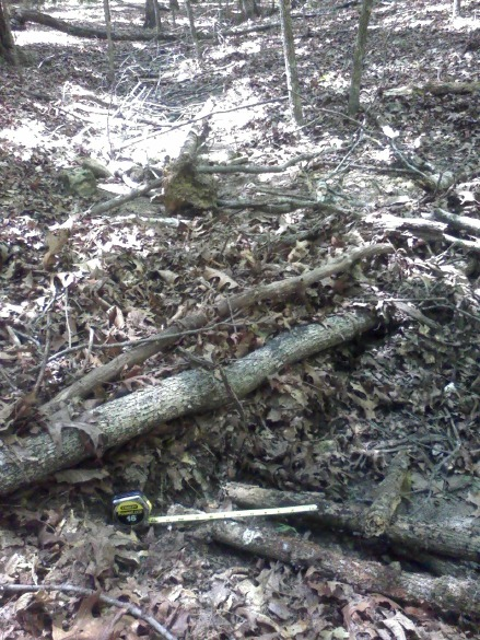 Branch that functions as dam for leaf pile.